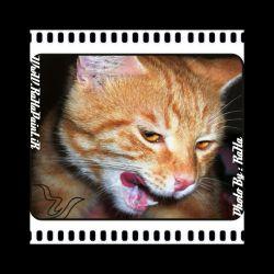 Photography .......... #Macro Subject .......... #Wild_Cat Registration ........... #Casio_Camera Full Courses #Photography  Free School Of #Visual_Arts #RaHa  عکاسی ........ #بزرگ_نمایی سوژه ........... #گربه_وحشی ثبت .......... #دوربین_کاسیو #آموزش دوره کامل #عکاسی  آموزشگاه آزاد #هنرهای_تجسّمی #رها