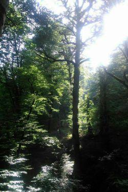 آفتاب این روزها دلگیر بود,دلش تابیدن نمیخواست,پشت ابر پنهان شد ,باران مهربان صورتش را شست, وابر قلقلکش داد,جنگل صدایش کرد,صدایی که او را دلتنگ کرد,آفتاب بود دیگر پرتوش از فاصله ها گذشت...