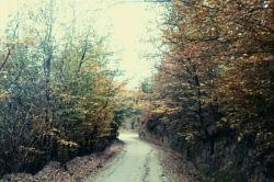 جنگل زیبای پاسند بهشهر مازندران