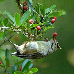 ماه من! غصه اگر هست بگو تا باشد... معنی خوشبختی بودن اندوه است! این همه غصه وغم  این همه شادی و شور چه بخواهی و چه نه... میوه ی یک باغند همه را باهم و با عشق بچین ولی از یاد مبر پشت هر کوه بلند سبزه زاریست پر از یاد خدا که در آن باغ کسی میخواند که خدا هست خداهست  خدا هست هنوز...سلام صبحتون شاد شاد