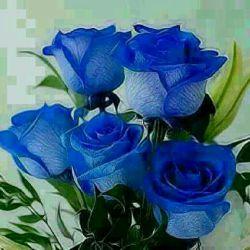 تقدیم به روی گل زیبای شما دوستان