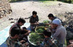من بچه های هیت درحال سبزی پاک کردن تو حصار