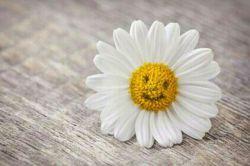 ★☆لبخند تو خلاصه خوبیها ست لبخند بزن لبخند گل زیبا ست☆★