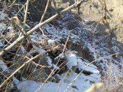 برف پاییزی