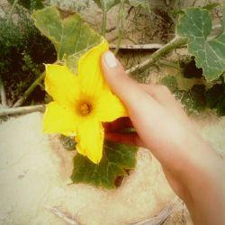 تو زندگیت واسه کسى بسوز که براى خاموش کردنت با اشک تلاش کنه! #گل#برای#دوستای#گلم #عکاس#خــــــــــــــــودم