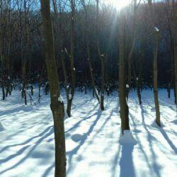 لحظه تولد حس عجیبی داشت,تمام بدنش از بلور یخ بود,شفاف چون الماس!چیزی میتپید,اما پیدایش نکرد,نه زمستان را میشناخت!،نه زمین را,اذن دادند که فرود بیاید..آن دم درختان عور را دید,در آغوش دوستانش آرام گرفت,اینجا زمستان بود انگار...