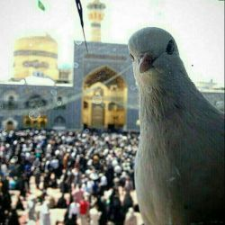سلفی کبوتر امام رضا علیه السلام