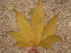 # پاییز . # کوه سنگی مشهد
