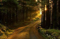 هرصبح ،پلکهایت ،فصل جدیدی از زندگی را ورق میزند اولین سطر این است خدا همیشه با ماست پس بخوانش با لبخند ...سلام صبحتون بخیر و شادی