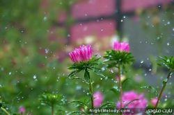 باز باران بارید،خیس شد خاطره ها،مرحبا بر دل ابری هوا،هرکجا هستی باش،آسمانت آبی و تمام دلت از غصه دنیا خالی...