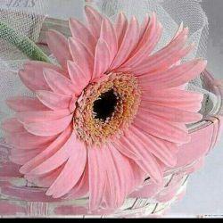 یادمان باشد ک هیاهوی دنیا مارا از یاد خدای مهربون غافل نکند ...سلام روزتون پراز لبخند