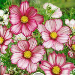 سلام دوستان این گل هدیه به شما امشب شب جمعه بهار صلوات الهم صلی علی محمد واله محمد