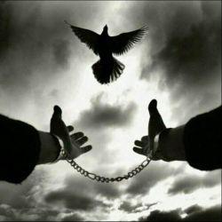 #کاشکی از همه مخفی بشود این شادی/ کاشکی وصل شود عشق تو به #آزادی...