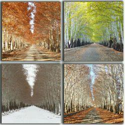 این چهار تصویر در چهل روز ثبت شده