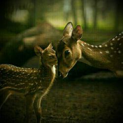 مهربانی همه جا هست .کافی است دور و برمان را بنگریم