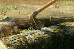 بیچاره مترسک سرتاسر سال از مزرعه محافظت می کرد ولی با آغاز فصل سرما تنش هیزم کشاورز شد آری ، پاداش وفاداری جز این نیست •