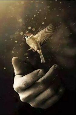 """میان پرواز تا پرتاب تفاوت از زمین تا آسمان است، پرواز که کنی، آنجا میرسی که خودت می خواهی اما... پرتابت که کنند، آنجا می روی که آنان می خواهند. پس پرواز را بیاموز...!!! پرنده ای که """"پرواز"""" بلد نیست، به """"قفس"""" می گوید، *""""تقدیر"""" !*"""
