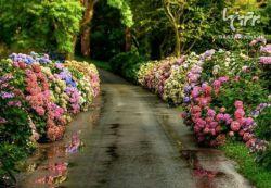 هیچکس نمیتواند باز گردد و شروعی جدید را رقم بزند  اما هر کسی می تواند شروع کند و پایانی خوش را بسازد....