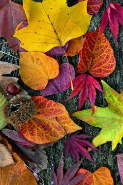 پاییز.