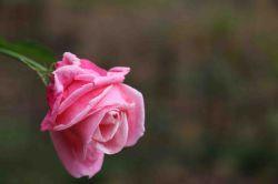 تقدیم گلهای سرزمین آریایی