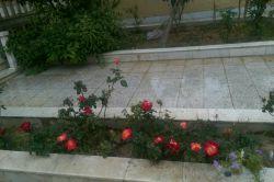 گل ها بعد از بارون.............