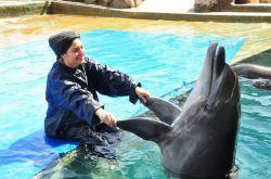بازی مهناز افشاری با دلفین در استخر