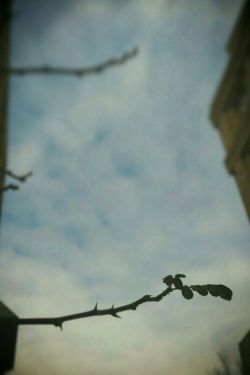 جوانه ای بود،که دلش را به آسمان گره زد... #عکاسی_با_موبایل #طبیعت