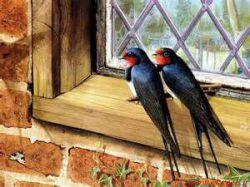 وچیست سهم من از تو؟ترانه ی زخمی!!وگریه های شب و بهانه ی زخمی!!درون قاب خودم تکیه داده ام تنها .......به کنج خلوت این خانه ،خانه ی زخمی!......همیشه فکرمن این است یک پرنده شوم .....رها شوم بپرم تا کرانه زخمی .......به جستجوی تو ای اشنا ترین روزی .....عبور می کنم از این زمانه زخمی ....ومی رسم به بهاری که مانده است انجا .....صدای هق هق تو روی شانه زخمی .....بهار بی تو فقط قاب سرد پاییز است ...کجاست منزل تو ای جوانه ی زخمی !!؟؟