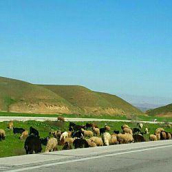 بهار درزمستان..خوزستان