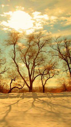 از باغ می برند چراغانیت کنند  تا کاج جشنهای زمستانیت کنند  پوشانده اند روی تو را ابرهای تار  تنها به این بهانه که بارانیت کنند  یوسف به این رها شدن از چاه دل مبند  این بار می برند که زندانیت کنند  ای گل گمان مبر به شب جشن می روی شاید به خاک مرده ای ارزانیت کنند  یک نقطه بیش فرق رحیم و رجیم نیست از نقطه ای بترس که شیطانیت کنند  آب طلب نکرده همیشه مراد نیست شاید بهانه ایست که قربانیت کنند