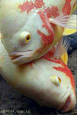 ماهیان از آشوب دریا ب خدا شکایت بردند!دریا آرام شد،وآنها صید تور صیادان شدند.آشوبهای زندگی حکمت خداست از خدا دل آرام بخواهیم ن دریای آرام