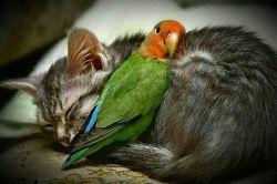 گاهی آنقدر تنها میشوی که آغوش دشمنت تنها تکیه گاهت است...