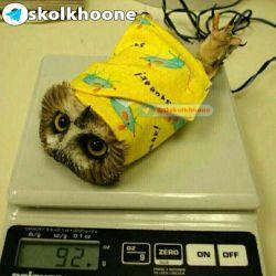 وزن کردن پرنده ها!!؟ o_O