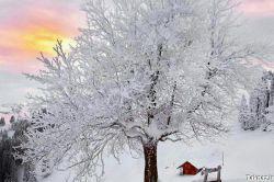 صبح زیبای زمستانی تون بخیرشادی دوستان خوبم سربلندشادباشید