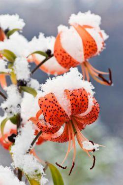 بویِ عطرت که شِنُفتَم؛   به لبم جان آمد . . .    منم آن گل،   که نچیدی و زمستان آمد . . .    #مریم_قهرمانلو