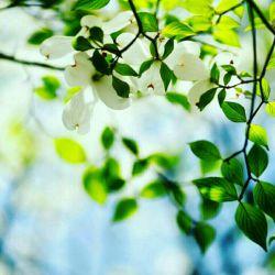 زندگی در لحظه و اکنون  رمز حس آرامش و خوشبختی است  درک همین لحظه از فرصت زندگی به اندازه یک عمر بی خبری می ارزد ... اکنون را زندگی کنیم . این لحظه تنها یقینی از زندگی ست که در دست مان است ، هدر ندهیم..... ایام به کام....