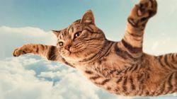 من ی پرندَ ــــم...  آرزو داااااااااااارررررررررررررررم...  پرنده بااااااااشــــــــــــــــــــم!!!   :)))))))))  (jootix.com)