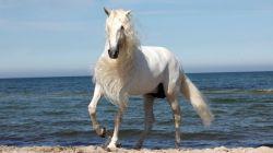 اسبها نجیبند چون معنی نجابت را میدانند