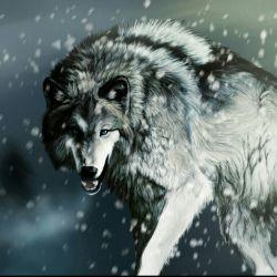 گرگ با همنوعانش شکار میکند خو میگیرد زندگی میکند ولی چنان به آنان بی اعتماد است که شب هنگام خواب با یک چشم باز میخوابد  شاید گرگ معنی رفاقت را خوب درک میکند.