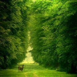 قسمت کشف نشده وجود شما به مراتب وسیع تر و نامتناهی تر از قسمت کشف شده آن است ، اسیر تفکر هیچ یا همه چیز نباشید، راههای مختلف زندگی را بیازمایید ، برای هر کس میلیونها شانس و فرصت در زندگی وجود دارد.  #لئو_بوسکالیا