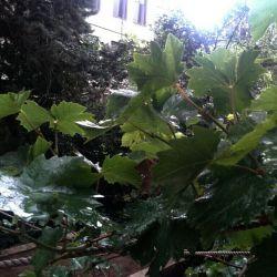 باران که خلاف نیست