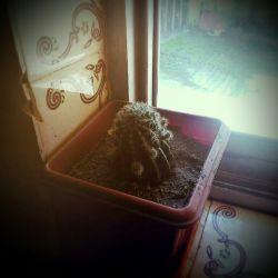تنهایی، یعنی کاکتوس کنار پنجره هم دمت باشه...