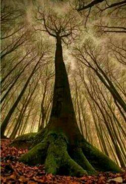 ریشه دار که باشی تا آسمان قد می کشی / ریشه های تو باورهای توست/باور کن.......... تغییر باورهایت تورا به اوج می رساند...
