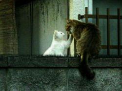 ایا انسان کمتر از حیوان است؟ارزش و دوام زندگی به زر و سیم نیست.محبت و احساس است که پایه و استحکامات زندگی را می سازد.