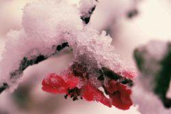 برف و گل