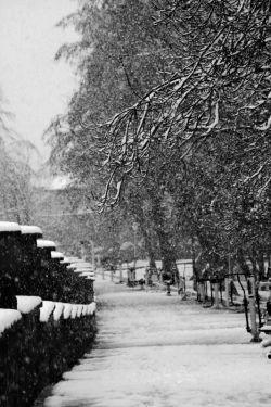 اولین برف زمستانی رشت . پارک کشاورز