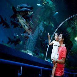 یکی از زیباترین جاذبه های دیدنی تایلند مکانی است  که به دنیای زیر آب ( Underwater World ) شهرت یافته و بزرگترین و مدرن ترین آکواریم آسیا می باشد که در جنوب پاتایا قرار دارد. این آکواریم که  به شکل تونل استوانه ای شیشه ای است 100 متر طول دارد و بیش از 4000 موجود آبزی در 200 گونه متفاوت را در خود جای داده است.