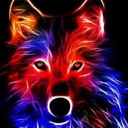 کسی غرور  گرگ را درک نکرد  مردم عاشق  سگ هایی هستند   که به پایشان می افتند   ﻭ ﺩم تکان می دهند