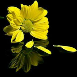 مواظب باشید دل عزیزانتون مثل این گل پرپر نشه
