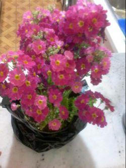 گل هدیه بدین به هم دیگر